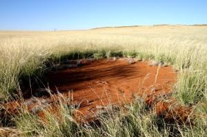 Feenkreis, Namib, Fairy Circle