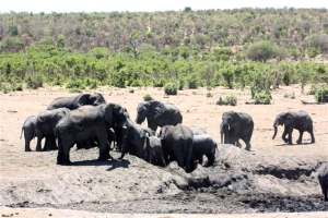Elefanten in Khaudom, Elephants in Khaudom National Park, Namibia